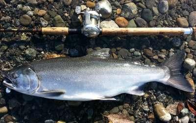 Мифы и реалии дальневосточного лосося и его родственников