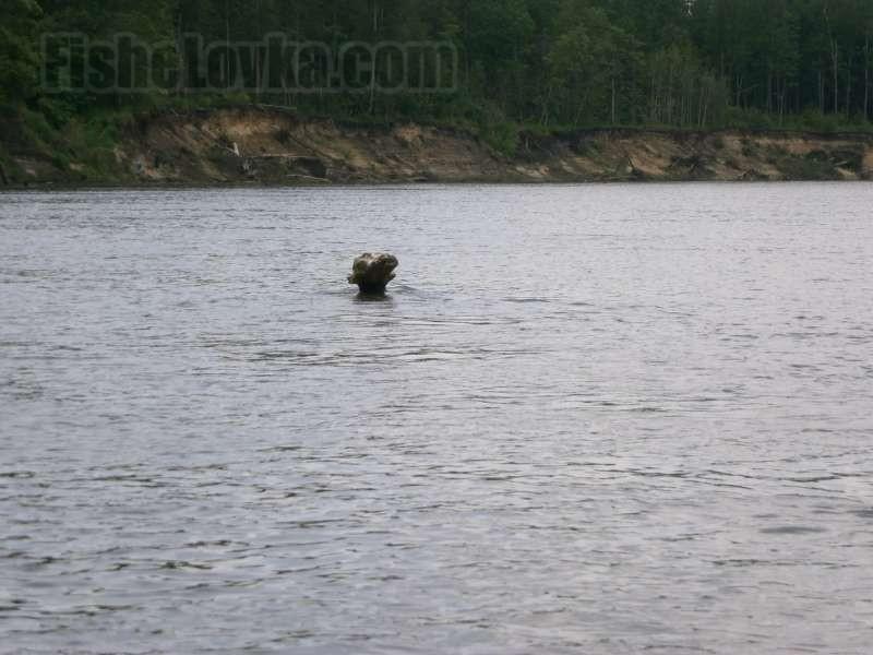 Привлекательная коряга на реке.