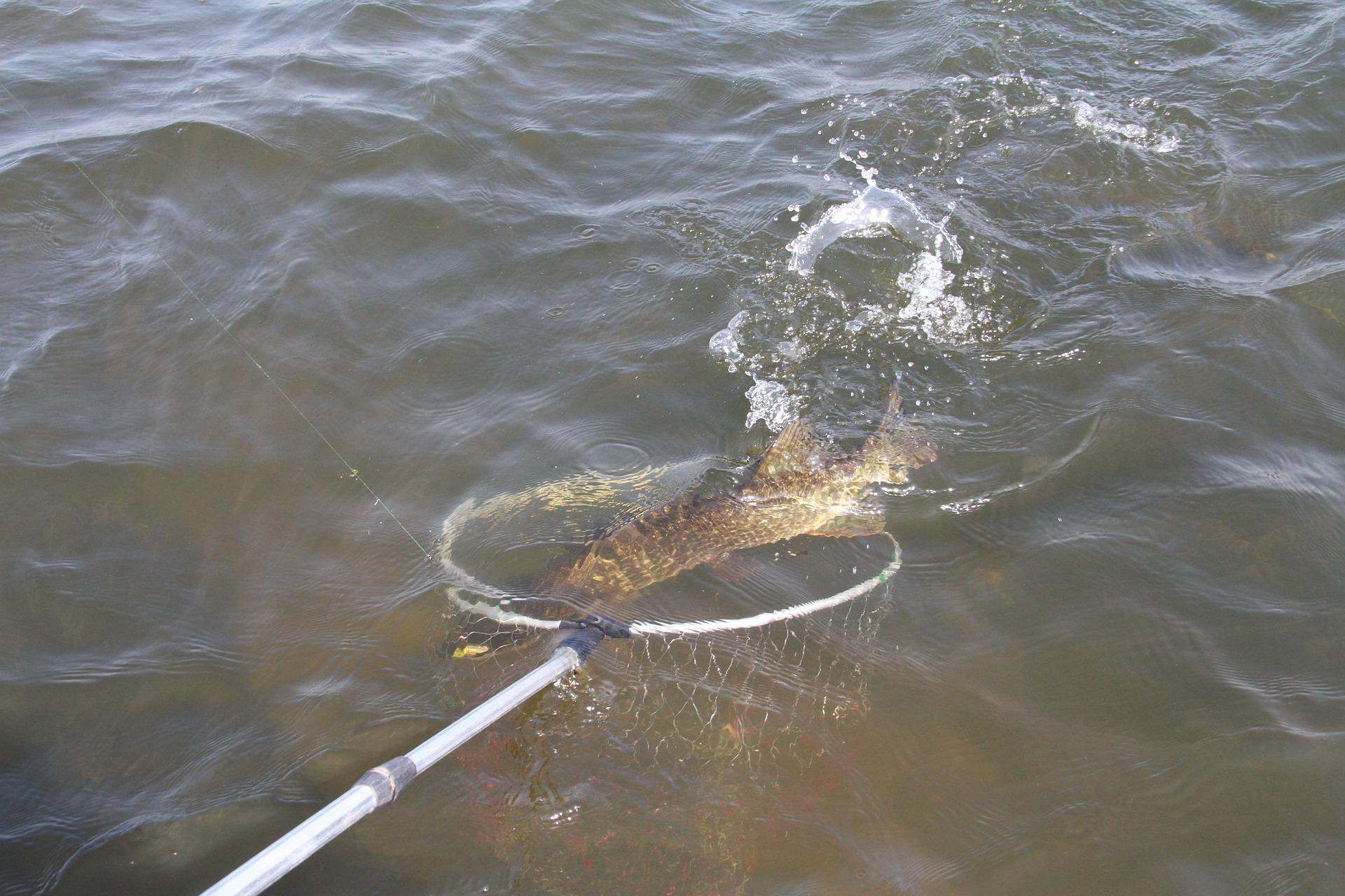 Воблеры на щуку: топ-10 лучших уловистых моделей для рыбалки осенью, техника ловли и правильная проводка