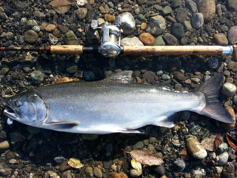 Хозяин водоема таймень – все самое интересное о рыбе-гиганте