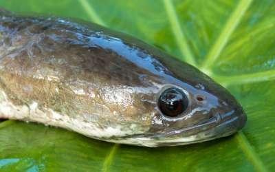 Змееголов – необычный хищник с интересными повадками
