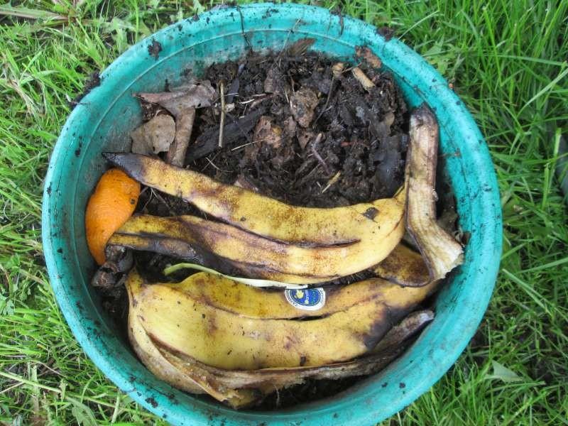 Перекладываем червей и субстрат в пластиковое ведро и кормим банановыми шкурками.