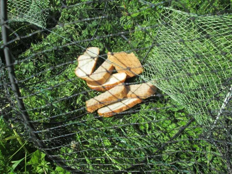 Ловля рыбы на вершу и способы ее самостоятельного изготовления