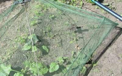 Применение паука для ловли рыбы – особенности изготовления и применения