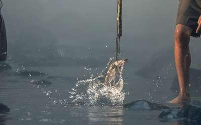 Без труда не вытащить и рыбки из пруда. А как вытащить ее еще и без удочки?