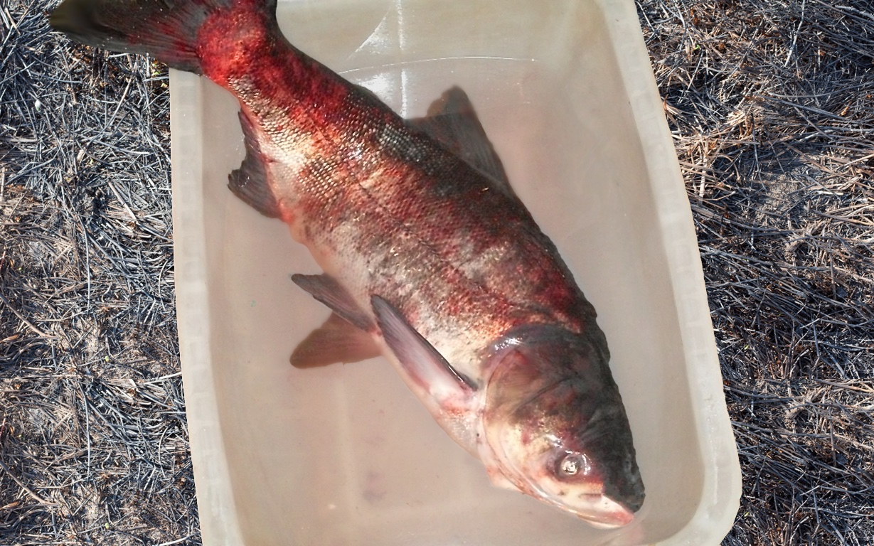 Рыбалка на толстолобика по сезонам: особенности ловли толстолоба весной, летом, зимой и осенью