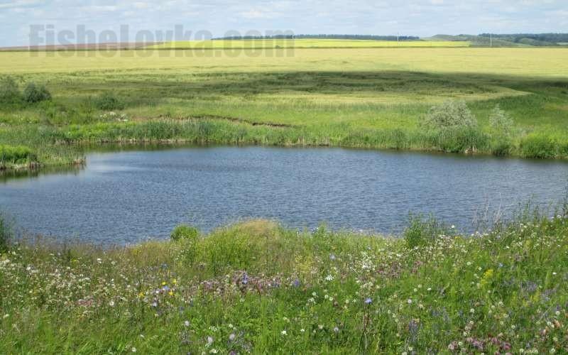 Небольшое озерцо в полях.