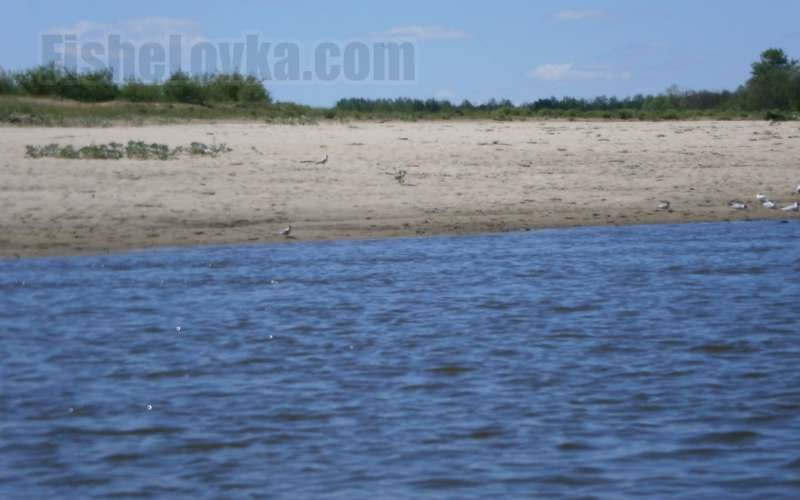 Песчаный пляж для нереста.