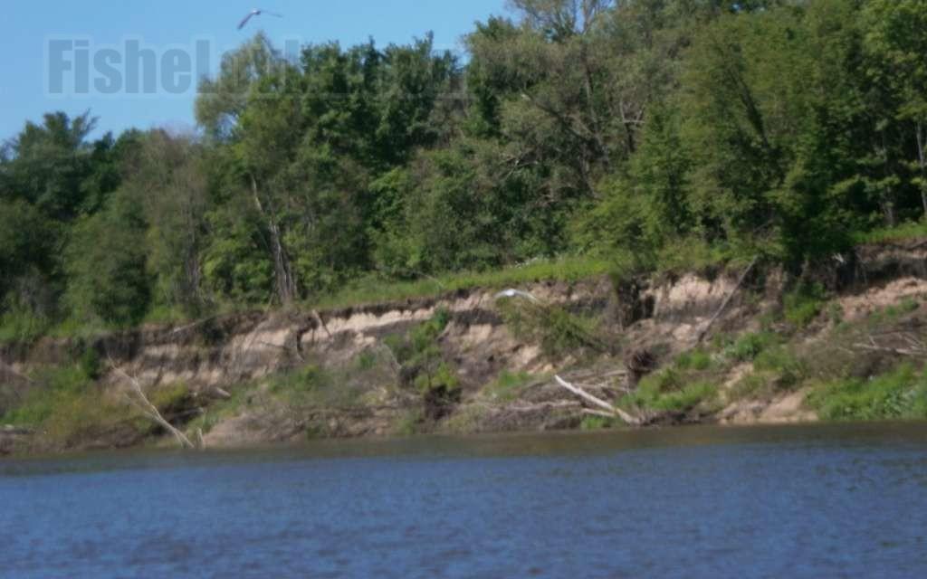 ловля леща на реке с сильным течением фидером