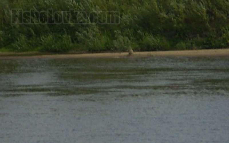Омут на реке.