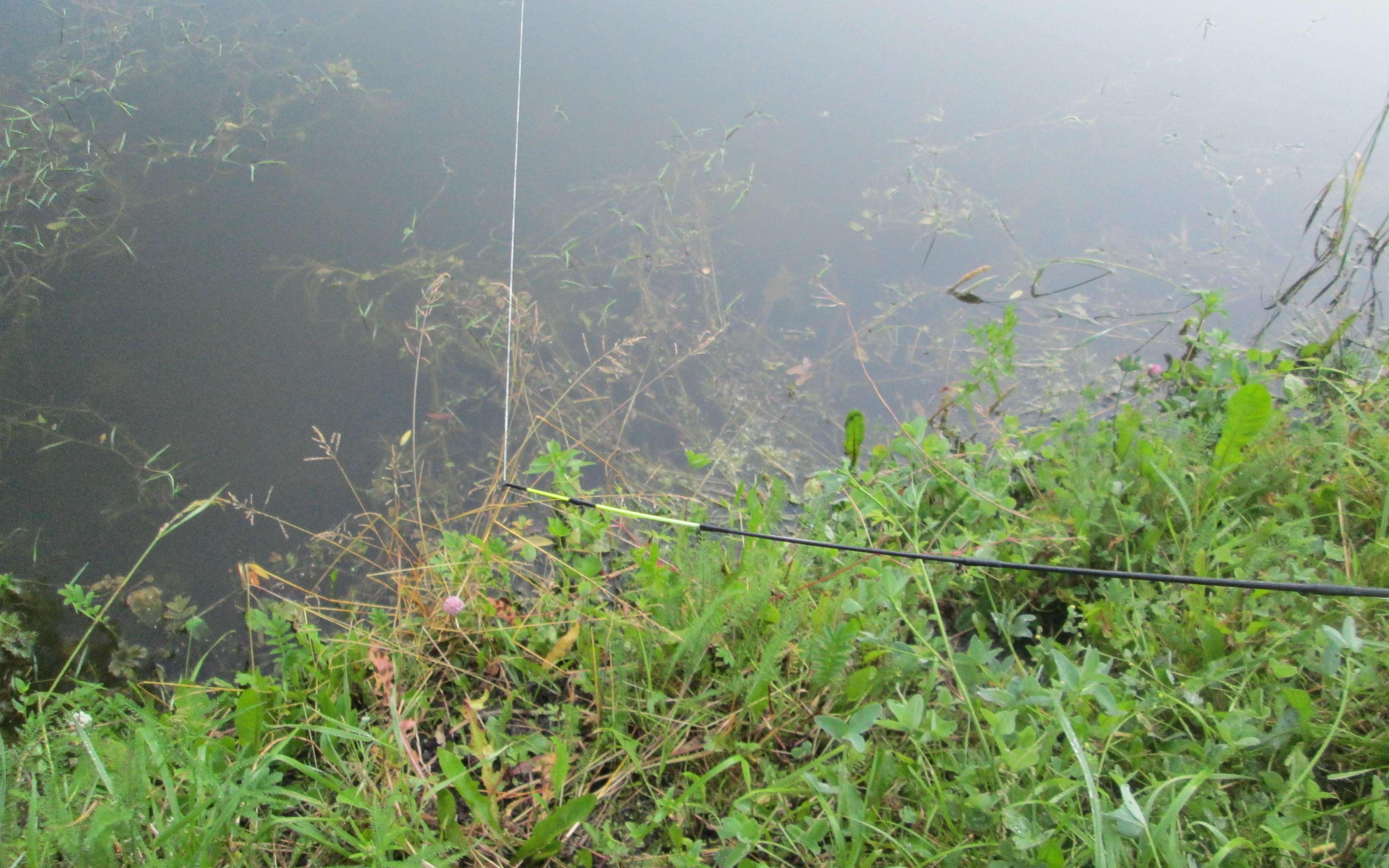 Особенности летней ловли рыбы на фидер