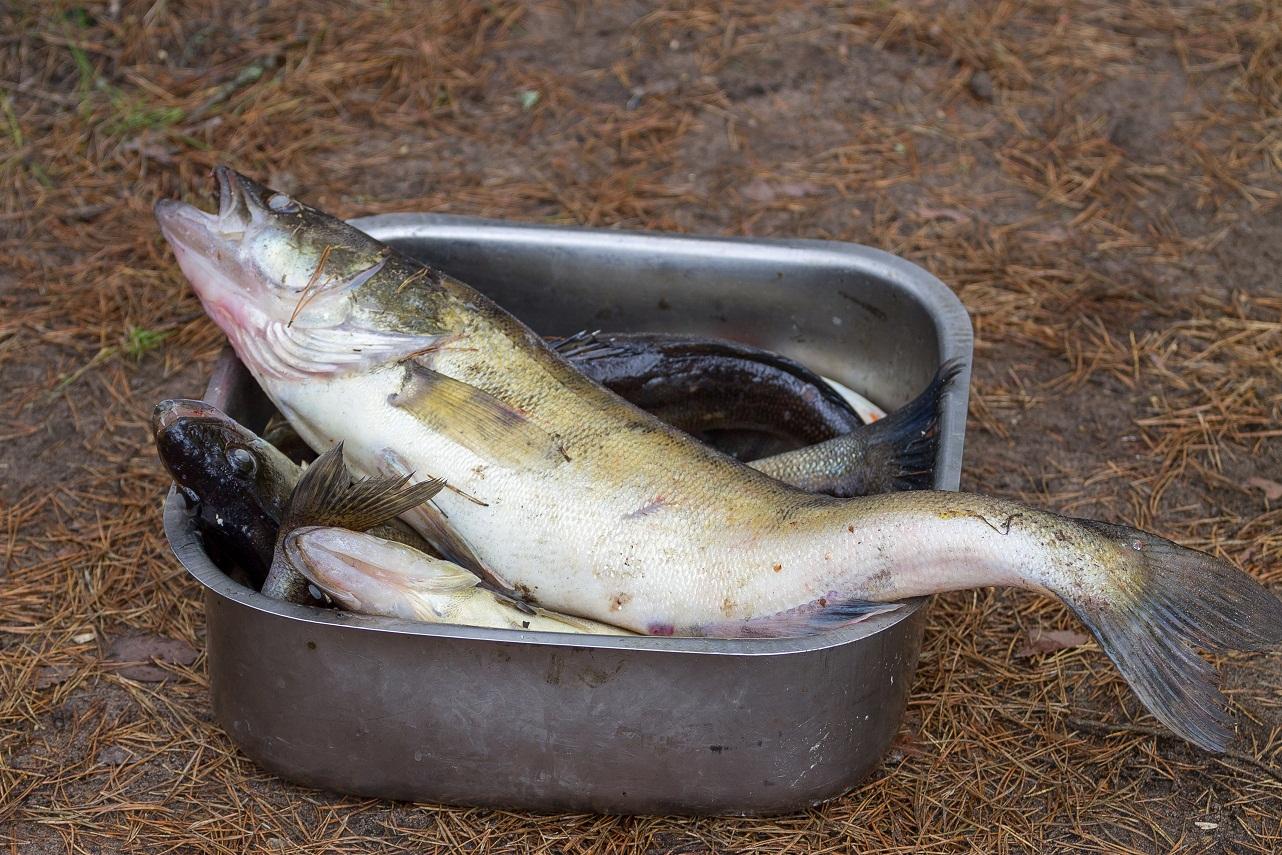 Ловля судака весной на спиннинг и джиг: снасти и приманки. Рыбалка на судака ранней весной