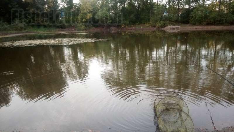 На деревенском пруду часто попадается линь.