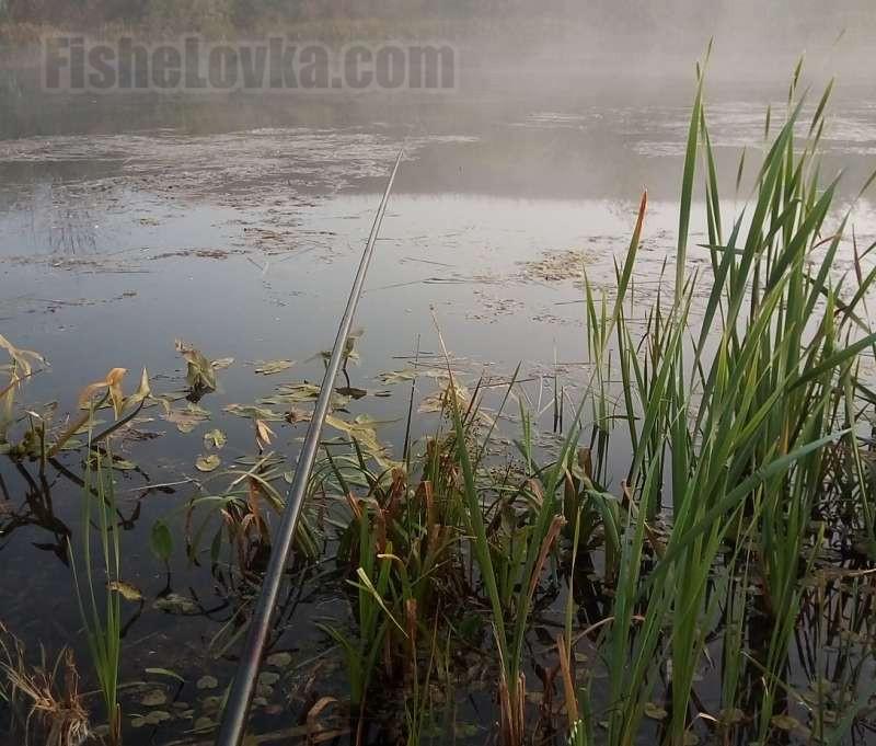 Поплавчанкой удобно рыбачить в окнах растительности.