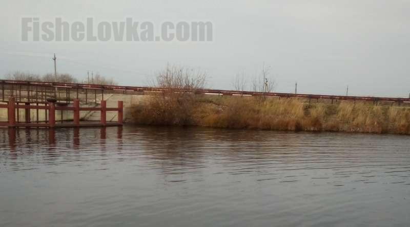 Плотина - уловистое плотвиное место во время нерестового хода