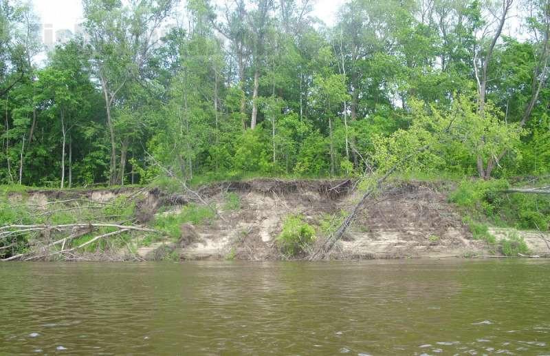 Язи водятся в средних и крупных реках.