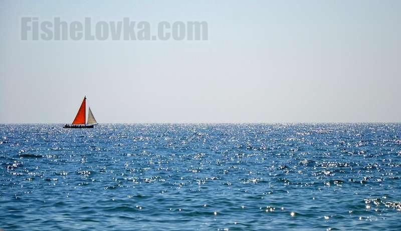 На просторах Черного моря